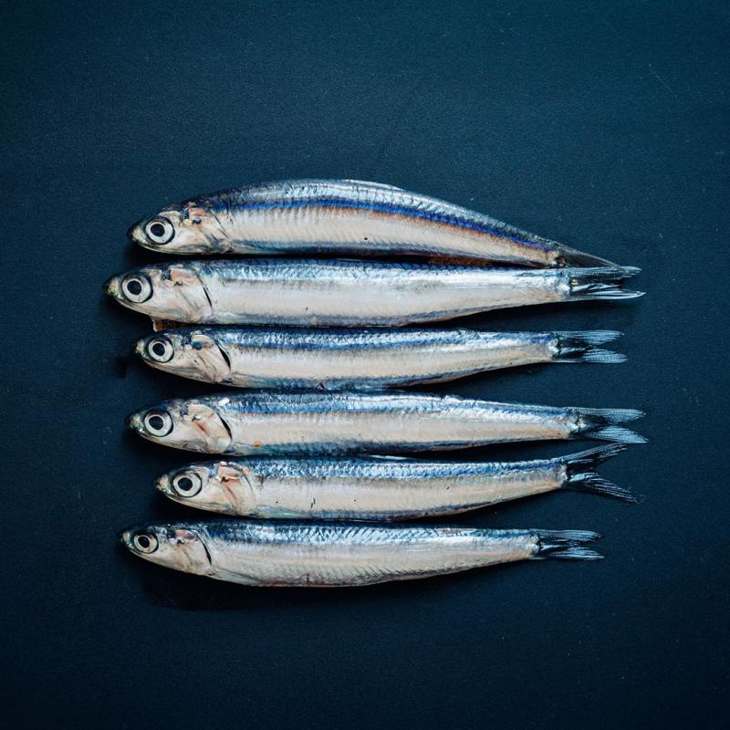 Il Pesce Azzurro Mamamediterraneum